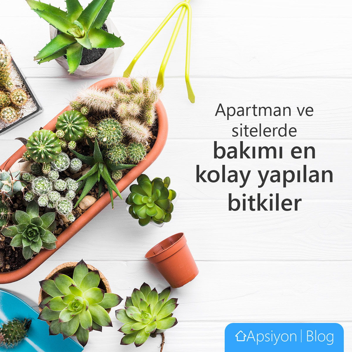 Apartmanda Bakımı En Kolay Bitkiler